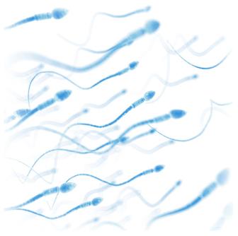 sperm_standby